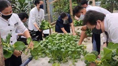 Memanen Sayuran Hidroponik